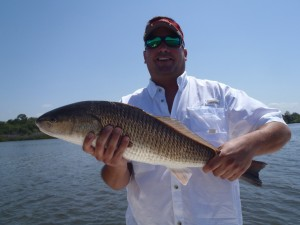 nice redfish caught in tampa bay
